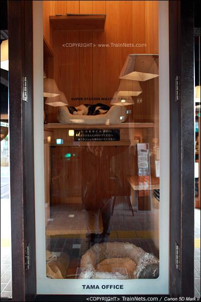 贵志站。阿玉猫站长的办公室。(IMG-4293-120130)