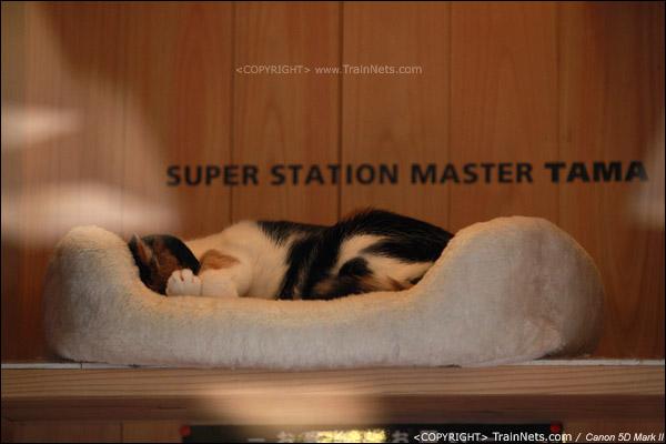 贵志站。大名鼎鼎的阿玉站长 可惜她一直在睡觉!直到下午五点钟下班!(IMG-4300-120130)