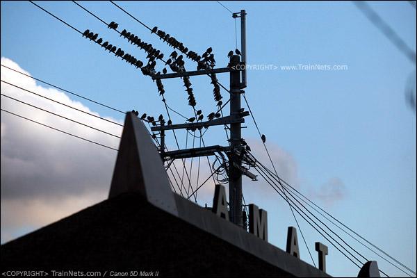 贵志站。在车站屋顶歇息的麻雀。(IMG-4364-120130)
