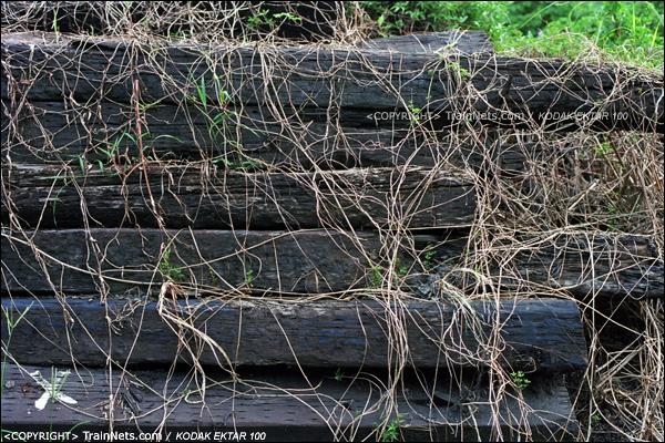2013年8月10日。广州钢铁厂铁路。铁路北头的维修车车库,路旁的枕木被野草吞噬。(E0228)