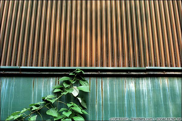 2013年9月7日。韶关机务段。一棵植物依附着车身向上生长。(E0631)