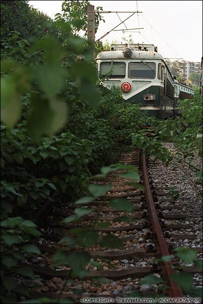 2013年9月7日。韶关机务段。停放SS1的地方杂草丛生。(E0704)