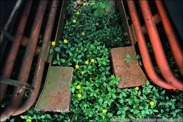 2013年9月7日。韶关机务段。两台SS1之间的铁轨间长满了小花。(E0708)