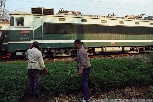 2013年9月7日。韶关机务段。两位阿婆利用SS1旁的空地种菜。(E0733)