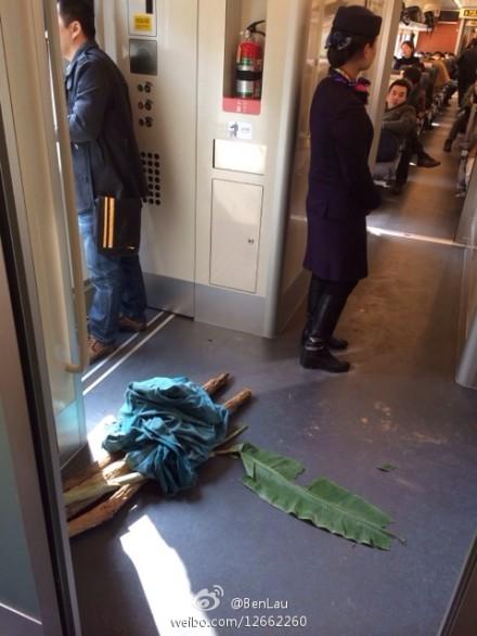 2013年12月28日。厦深铁路开通日。工作人员把轨道区内的树枝搬入D2316次列车。(图片使用经刘先生同意)