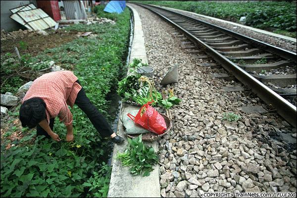 2013年5月6日。广西南宁北湖客技站联络线。附近的居民直接在铁路旁种菜。(D8611)