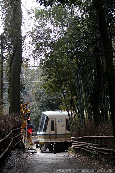 2012年2月2日。日本京都。嵯峨野公园里的一个小道口,221系列车在竹林中穿行。(IMG-6334-120202)