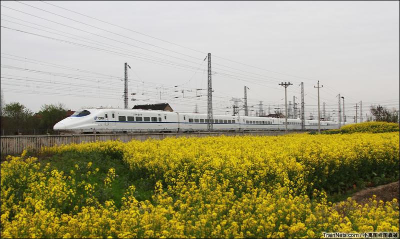 2014年3月,上海金山铁路,列车在叶榭站的油菜花海间穿行。
