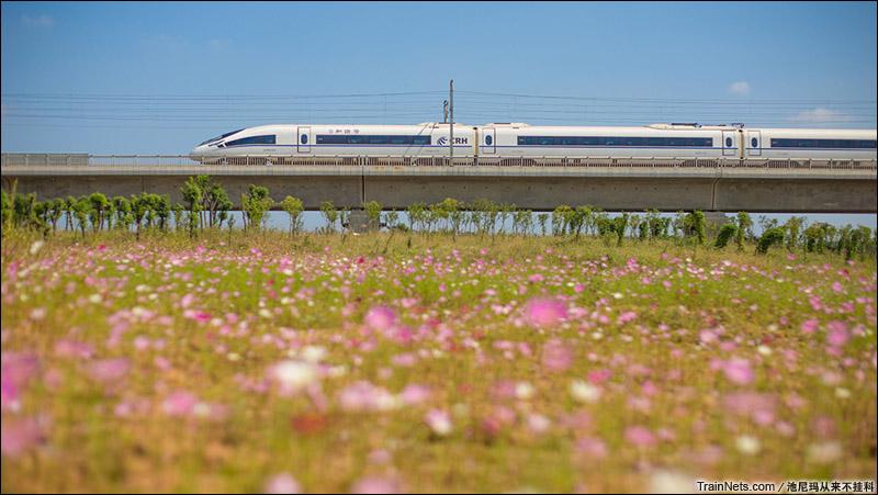 2014年10月1日。中国药科大学,宁杭高铁CRH380C列车飞驰而过。