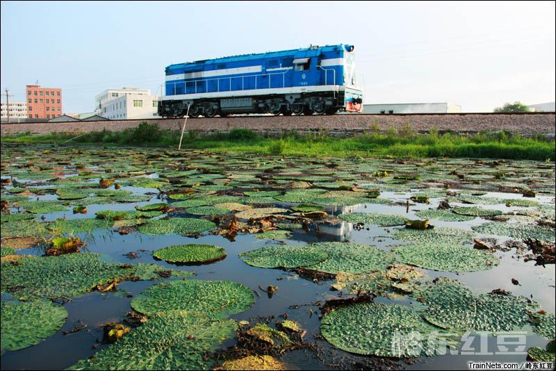 2014年8月22日。广东潮州。 DF5驶过潮安东凤芡实池塘,前往潮州站。