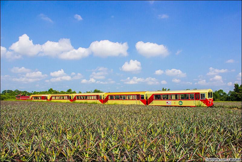 2014年8月3日。台湾嘉義,阿里山小火车。