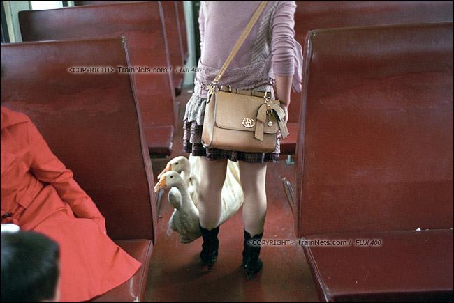 2013年10月。渝怀线。7271次准备从梅江站开出,一位乘客提着几只鹅上车。(E1715)