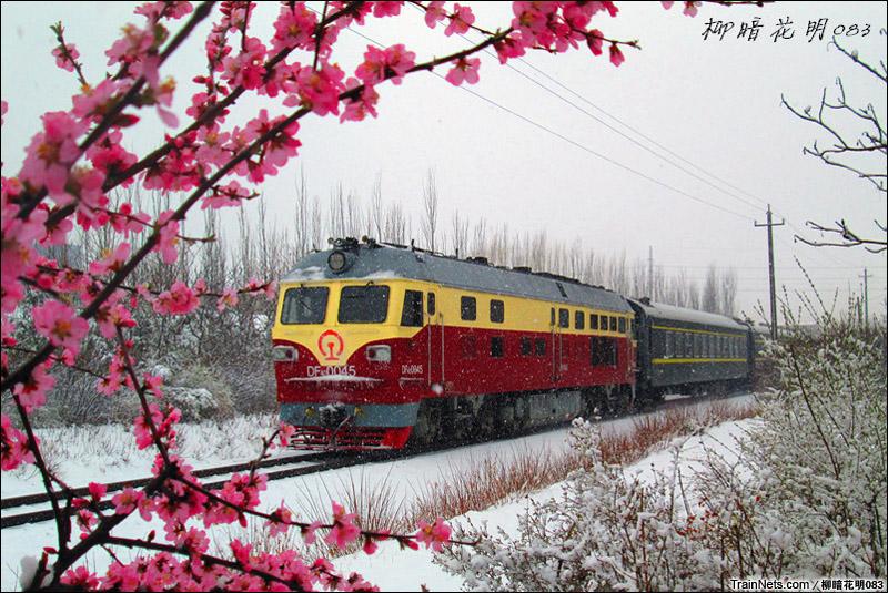 2015年4月12日。辽宁朝阳市,锦承线133公里。DF4D牵引客车在雪中开行。