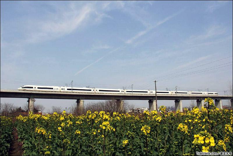 2015年3月。合肥南环铁路。CRH380B飞跃花海。(图/凌志九号)