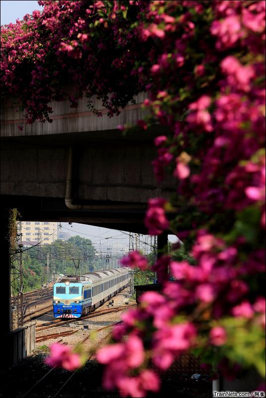 2014年10月8日。广州德康路。SS8牵引Z99次离开棠溪北,准备进入广州站。(图/阿准)