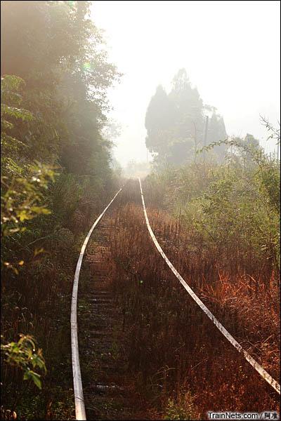 清晨步行杨梅山支线。(图/阿准)