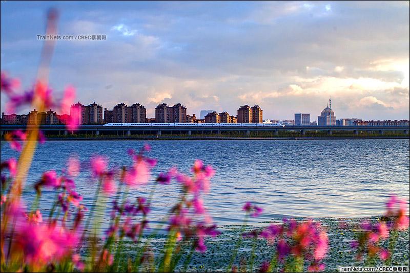 2015年8月24日。京沪高铁阳澄湖段。 繁花似锦。(图/CREC蔡朝阳)