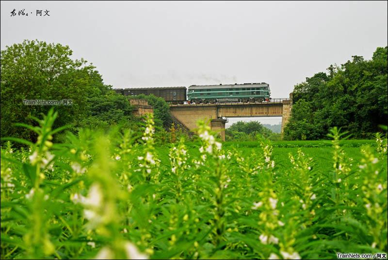2015年7月16日。湖南衡阳。湘桂铁路,三塘-朱家堰区间。DF4B牵引货列在田中穿行。(图/阿文)