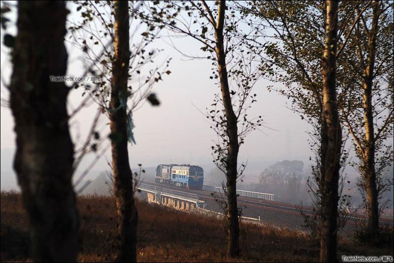 2015年11月16日。平齐线。双辽卧虎屯。眺望林间,DF4C牵引HXN5弯道通过。(图/赵飞)