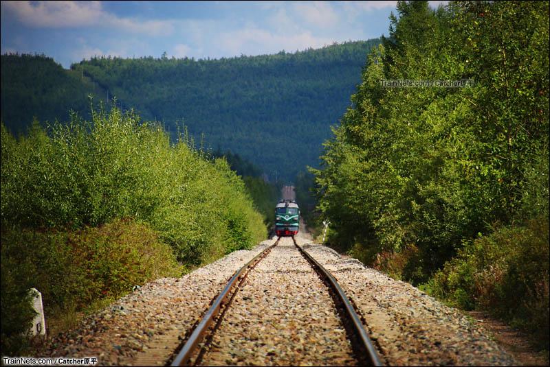2015年8月24日。内蒙古呼伦贝尔市根河市。哈局齐段DF4机车牵引4182次列车行驶在牙林线375km满归-阿龙山站区间。(图/Catcher原平)
