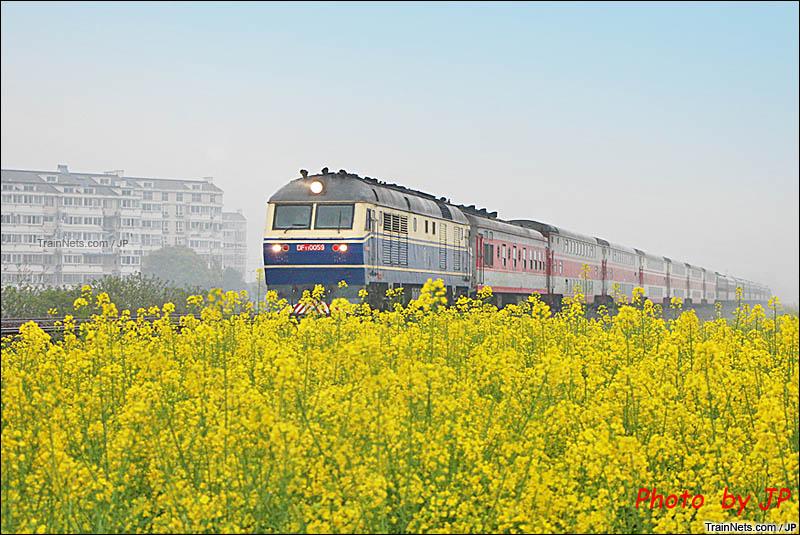 2016年。芜湖,青弋江南。DF11牵引客车飞驰在花田中。(图/JP)