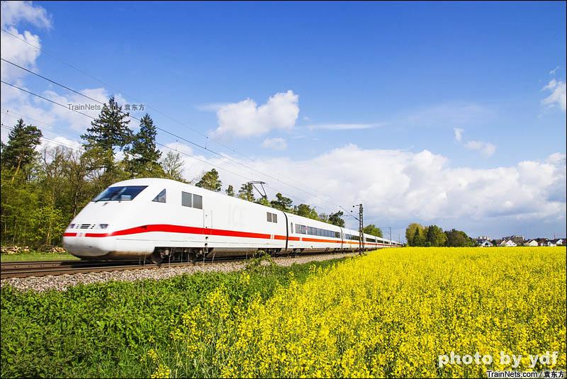 2016年4月24日。莱茵铁路Blankenloch站附近,行驶在油菜花海中的ICE2列车。(图/袁东方)