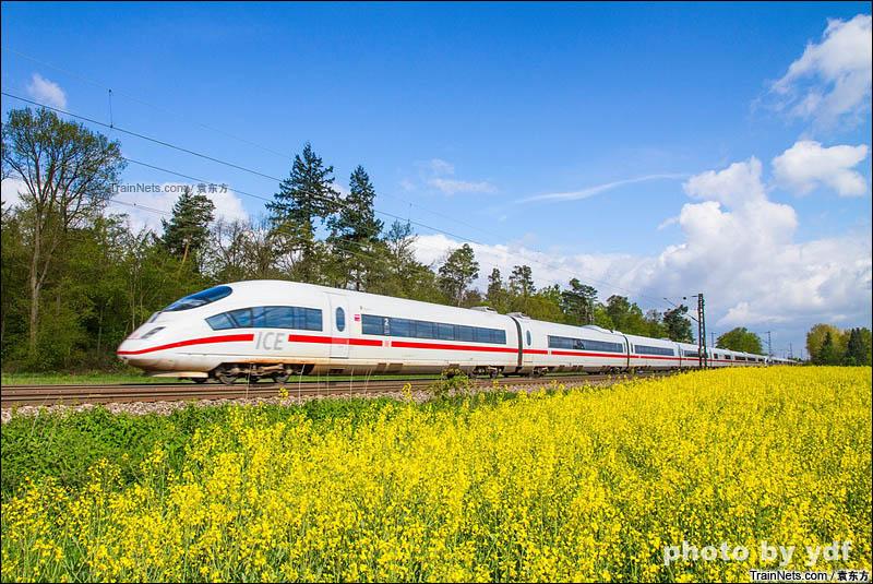 2016年4月24日。莱茵铁路Blankenloch站附近,行驶在油菜花海中的ICE3列车。(图/袁东方)