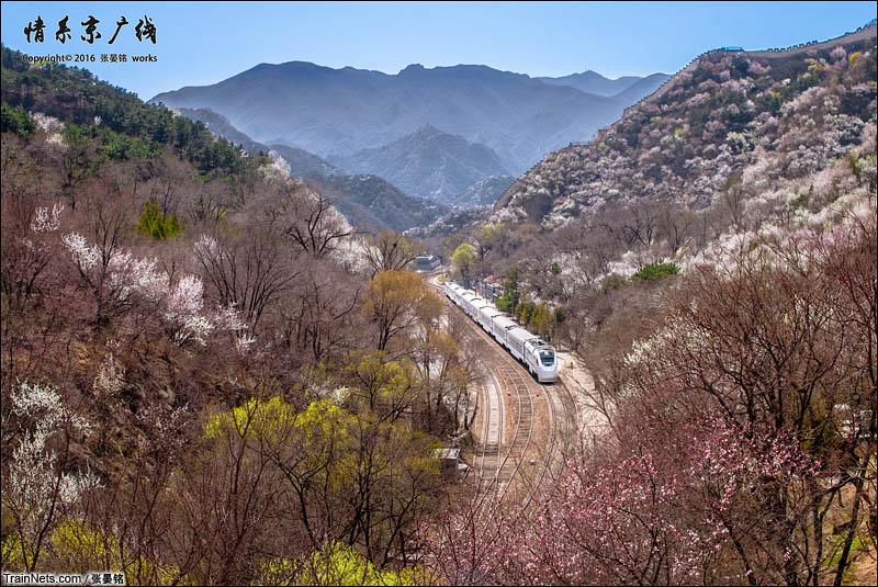 """2016年4月8日。京张铁路,S216停靠在青龙桥车站,正值正午,光线是顶光。我灵机一动拍摄了5张曝光不同的照片,合成出这张""""HDR花海青龙桥""""。(图/张晏铭)"""