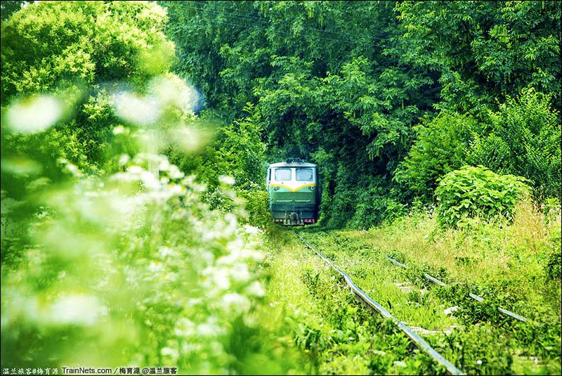 2016年6月10日。穿行于绿色隧道间的南京湖山小火车。(图/梅育源)