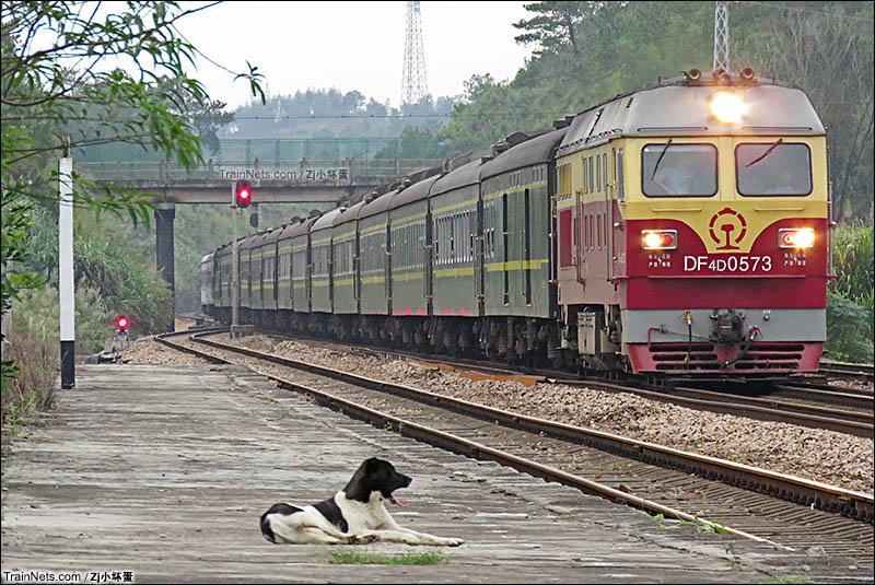 2016年10月。广东龙川。广梅汕铁路十二排站。DF4D牵引T8362/3次(汕头-广州东)列车快 速通过十二排站,往龙川站方向,而站台上一只狗狗正惬意地注视着开来的列车。(图/ZJ小坏蛋)